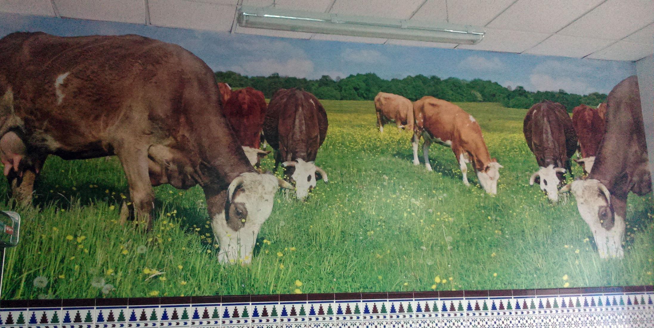 decoración vacas